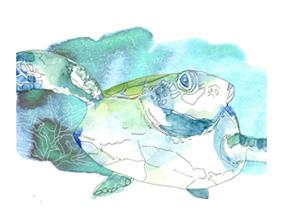 Sea tortoise illustration