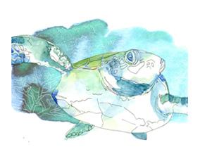 Sea tortoise illustration