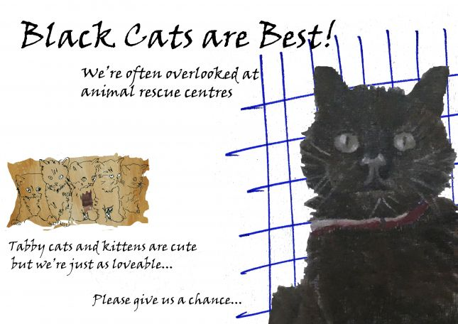 Black Cats are Best! Assignment 4