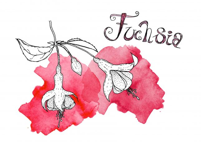 "Assignment 2: Randomly shaped colours - ""Fuchsia"""