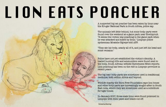 Lion Eats Poacher