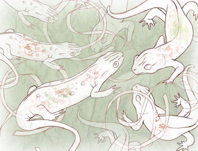 Trio 1: newts & ribbons