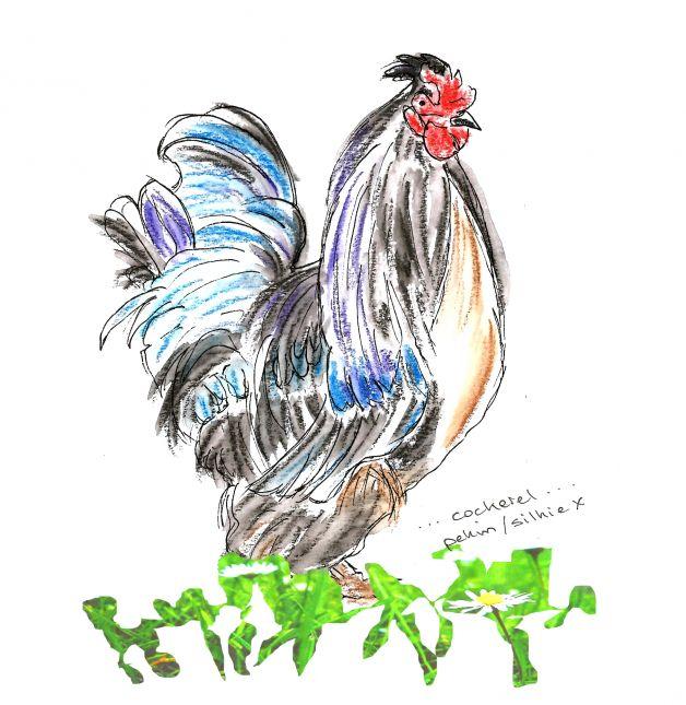Week 5 series - 1 of 3 cockerel in grass