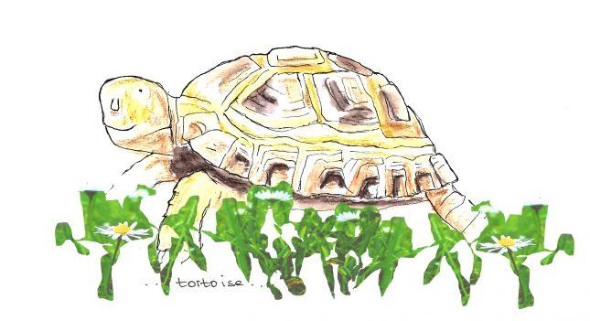 Week 5 series - 2 of 3 tortoise in grass