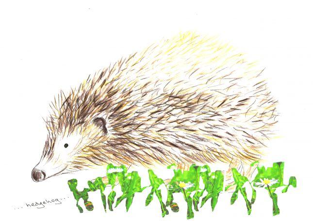 Week 5 series - 3 of 3 hedgehog in grass