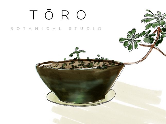 Illustration Inc Lesson 5 Series A (Toro3)