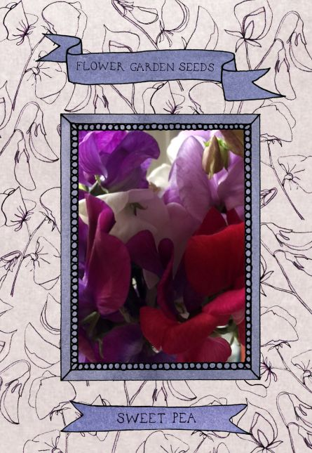 Illustration series 2 seed packet