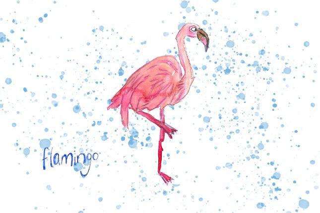 Flamingo - series of bird illustrations