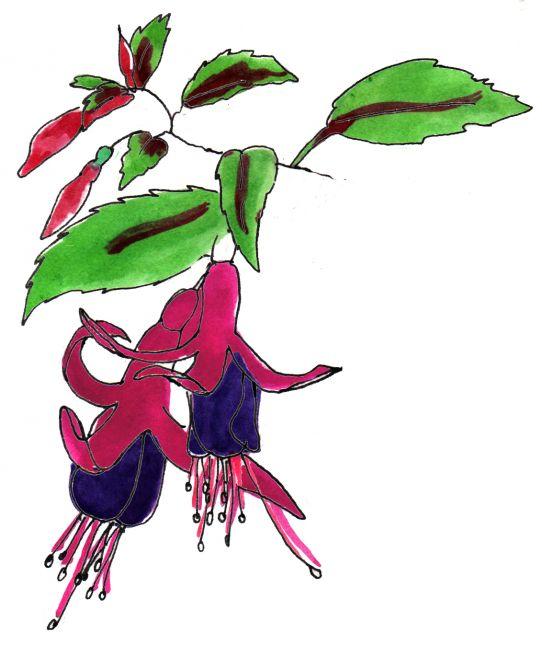 fusicia colour ink