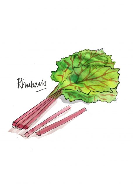 Rhubarb - fresh out of the garden!