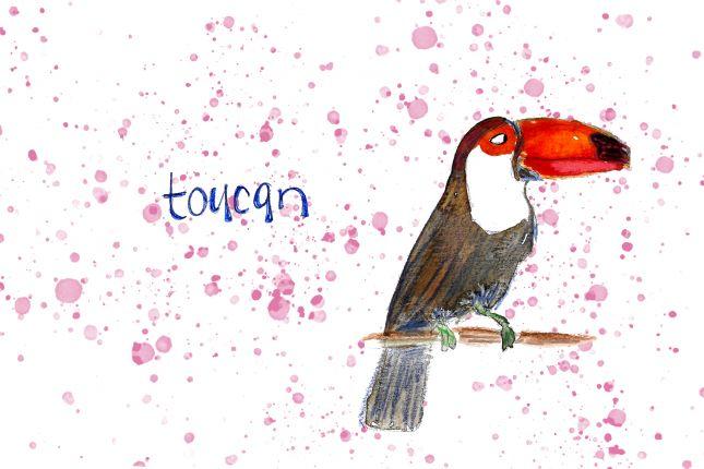 Toucan - series of bird illustrations
