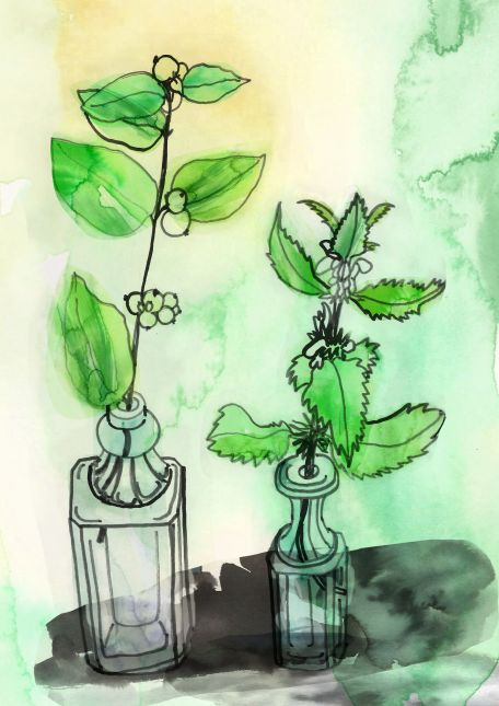 watercolour and ink plants